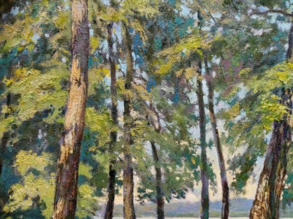 солнеце на стволаж деревьев